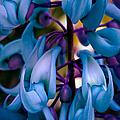 Strongylodon Macrobotrys - Blue Jade Vine by Sharon Mau
