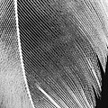 Structure Of Quill by Sarka Olehlova