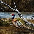 Strutting Pheasant by Darice Machel McGuire