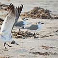 Strutting Seagull On The Beach by Patricia Twardzik