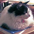 Studio Cat by Karen Zuk Rosenblatt