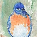 Study Of A Bluebird by Bev Veals