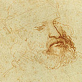 Study of a male head by Leonardo Da Vinci
