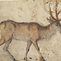 Study Of A Stag Recto,  Study Of Goats Verso Lucas Cranach by Litz Collection