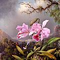 Study Of An Orchid by Martin Johnson Heade