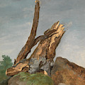 Study Of Rocks And Branches, George Augustus Wallis by Litz Collection