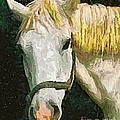 Study Of The Horse's Head by Dragica  Micki Fortuna