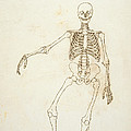 Study Of The Human Figure, Anterior View, From A Comparative Anatomical Exposition Of The Structure by George Stubbs