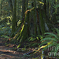 Stump And Fern by Sharon Talson