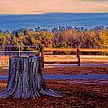 Stump Still Standing by Lewis Mann