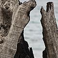 Stumped V3 by Douglas Barnard