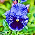 Stylized Blue Pansy by Jeanne May