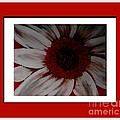 Stylized Daisy With Red Border by Barbara Griffin