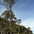 Sub Tropical Heaven by Skip Willits