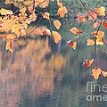Subtle Autumn Reflections by Anita Adams
