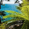 Subtropical Forest Of Abel Tasman Np In New Zealand by Stephan Pietzko