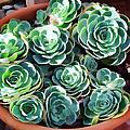 Succulent 13 by Dawn Eshelman