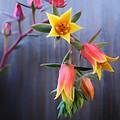 Succulent 23 by Dawn Eshelman