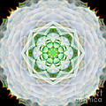 Succulent Mandala by Susan Bloom