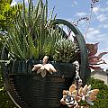 Succulents In A Planter by Jason O Watson