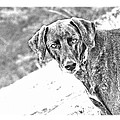 Such A Pretty Girl by Peggy Collins