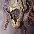 Sue The Tyrannosaurus Rex by Millard H. Sharp
