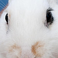sugar the easter bunny 1 -A curious and cute white rabbit close up by Pedro Cardona Llambias