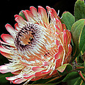 Sugarbush And Bees by Kate Brown