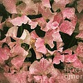 Sugared Sweetpeas by Joan-Violet Stretch