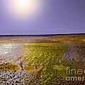 Sulphur Beach  by Chris R Kitchener