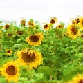 Sultry Sunflowers by Alice Gipson