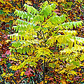 Sumac Leaves In The Fall by Duane McCullough