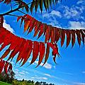 Sumac Red by MTBobbins Photography