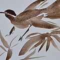 Sumi Bird by Beverley Harper Tinsley