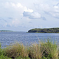 Summer At Guana Lake by Kenneth Albin