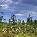 Summer At The Bog... by Nina Stavlund