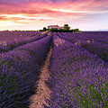 Summer At Valensole by Richard Susanto