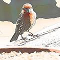 Summer Bird by Artist and Photographer Laura Wrede
