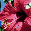 Summer Bloom by Eleni Mac Synodinos