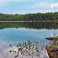 Summer Calm On Bubb Lake by David Patterson