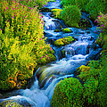 Summer Cascade by Inge Johnsson