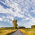 Summer Country Road by Alan L Graham