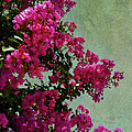 Summer Crape Myrtles by Paulette B Wright