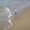 Summer Day Of A Gull 2 by Ellen Paull