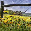 Summer Fields by Debra and Dave Vanderlaan