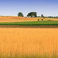 Summer Fields by Jamie McCann