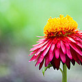 Summer Flower by Keith Ptak