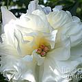 Summer Flower by Maxine Bochnia