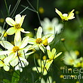 Summer Flowers by Corinne Rhode