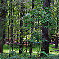 Summer Forest by Paulette B Wright